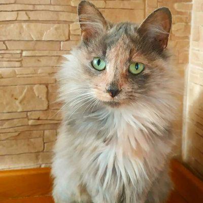Sofiyka: girl, 2 years
