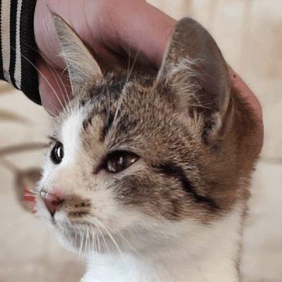 Konnor: boy, 7 months