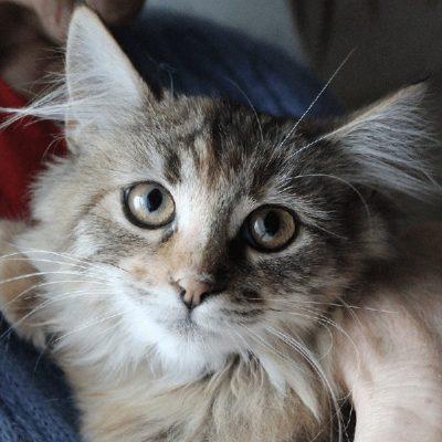Taya: girl, 6 months